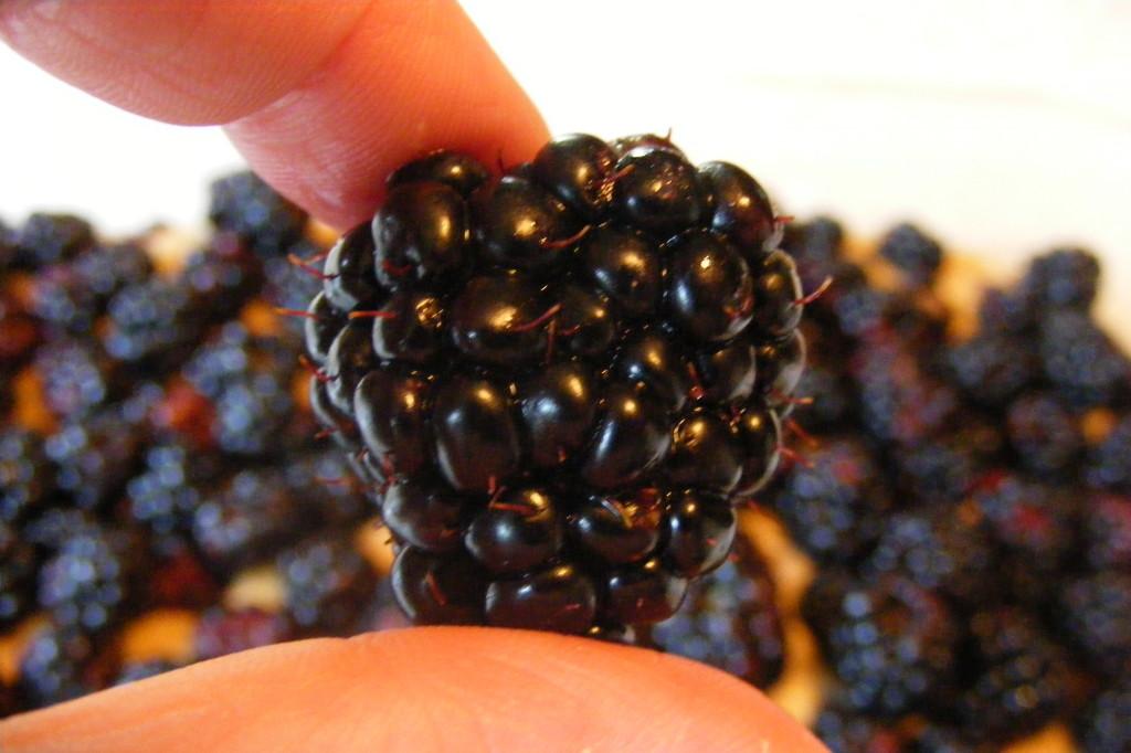 backtofamily.net~blackberry buckle